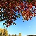 pcolors_0020.JPG