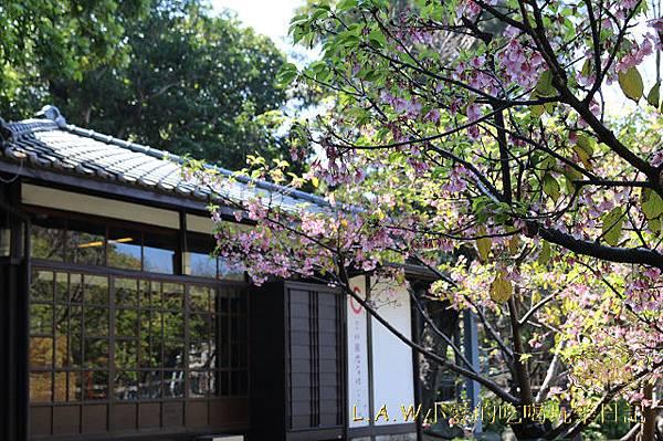 20150224@新竹麗池公園賞櫻-09.jpg