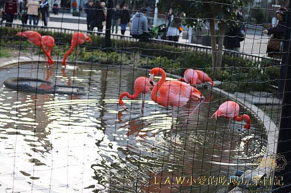 20150228@上野動物園-15.jpg