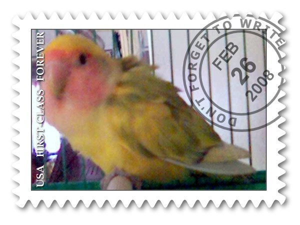 哇咔咔!爱情鸟邮票