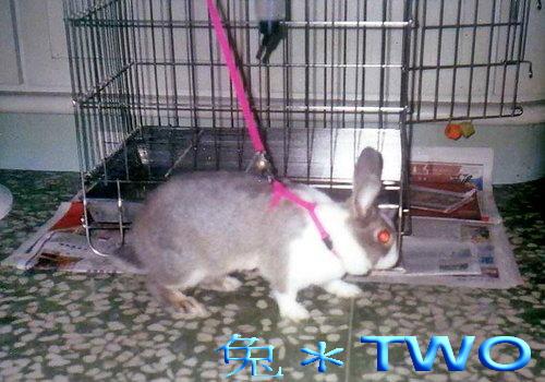 布小丁溜兔繩玩