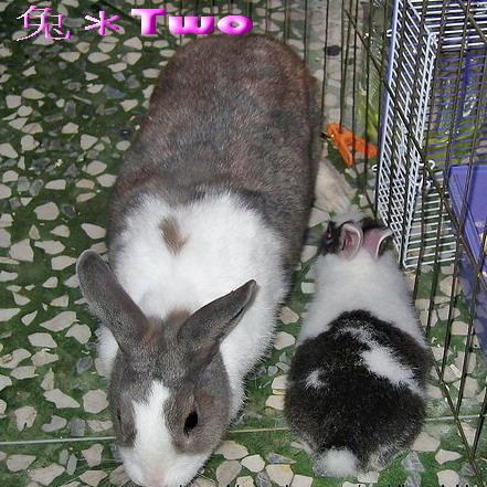 兔大爺豬小糰佔據位置