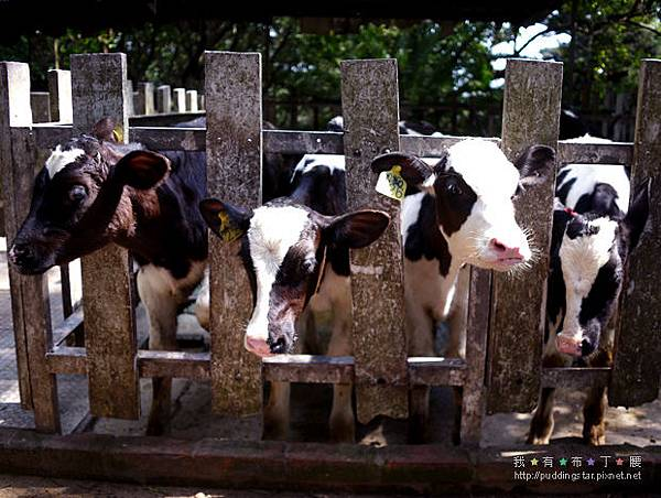 四方鮮乳牧場012.jpg