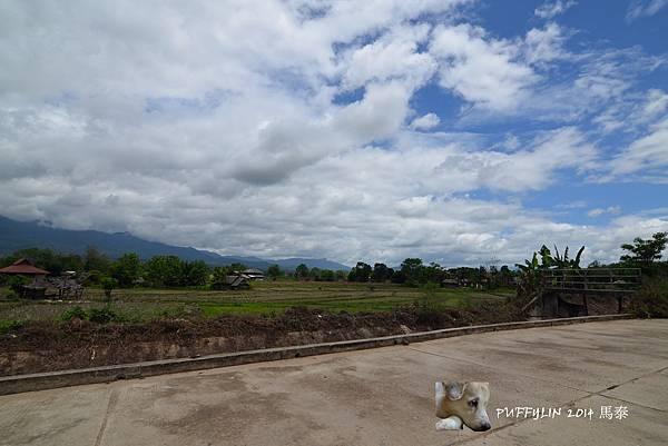 PhotoCap_20140521- (156).jpg
