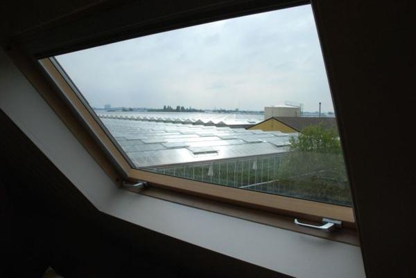 窗外一大片的溫室.JPG