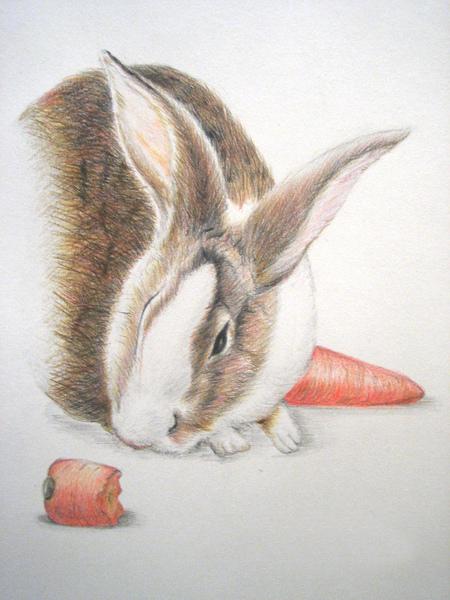 小兔.jpg