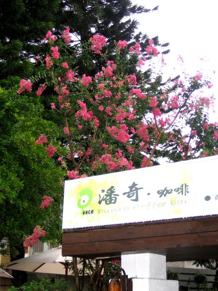 九宮樹-3.jpg