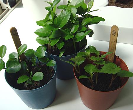 3種子.jpg