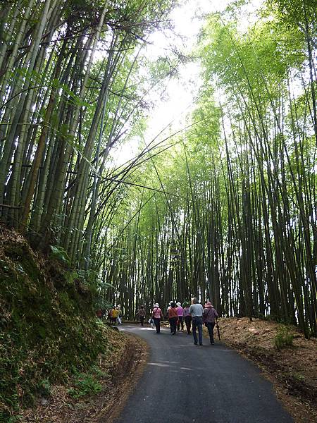 梅山-綠色隧道-01