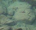 v1_20110315171545_pic.jpg