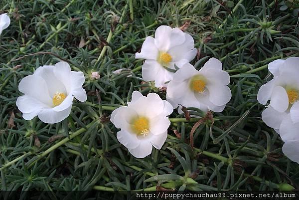 一旁的花兒們﹣1