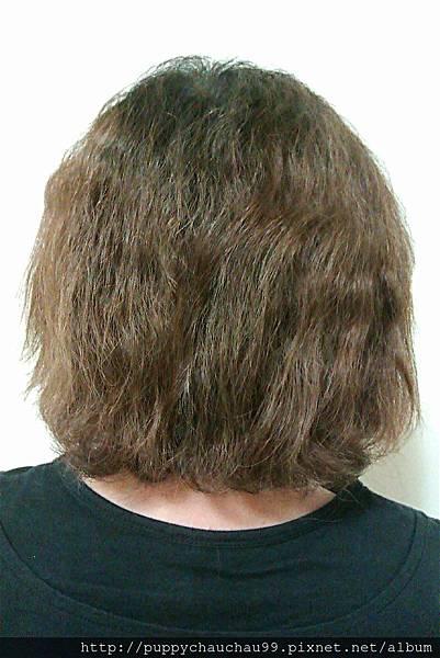 使用施巴洗髮乳之前的頭髮(蕎媽)