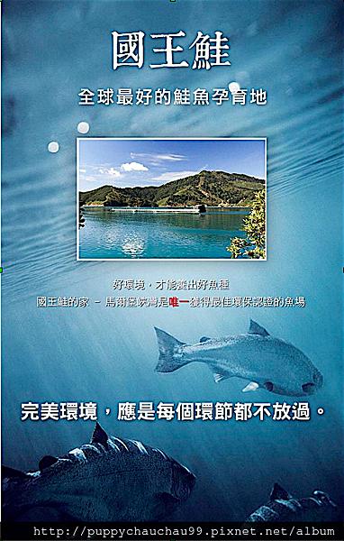 [盛和風食集]紐西蘭國王鮭魚(1)