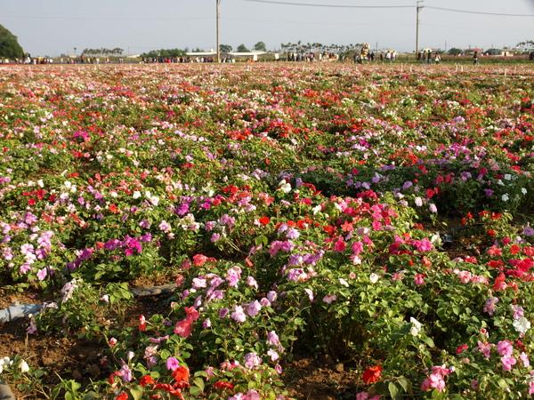 五彩繽紛的各色花朵