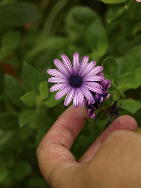 花瓣很特別的小菊花