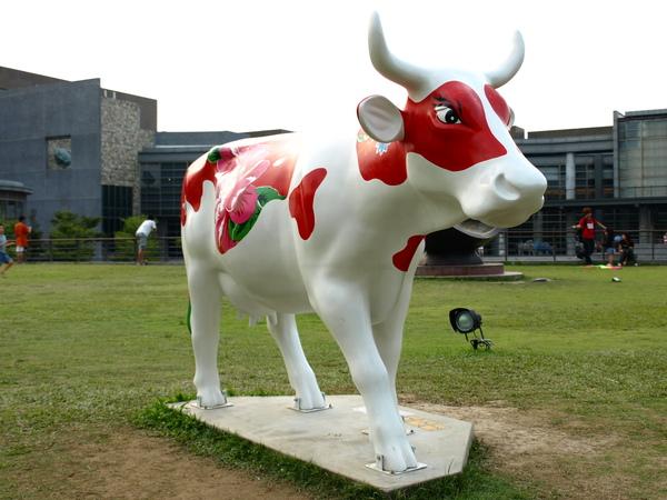 福爾摩莎牛