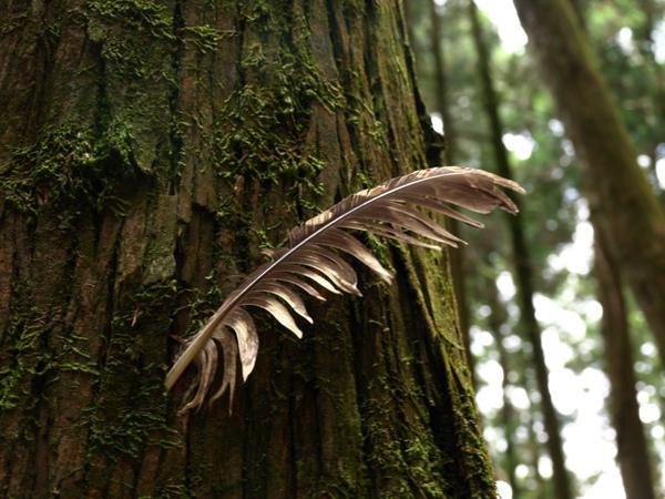 據說是老鷹的羽毛...被山友插在樹上