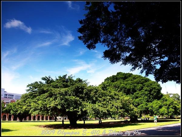 成大地標-榕園