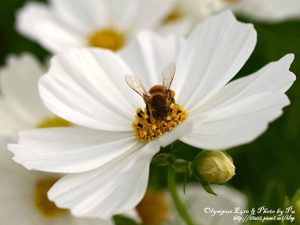 2009新社花海節~辛苦工作的小蜜蜂