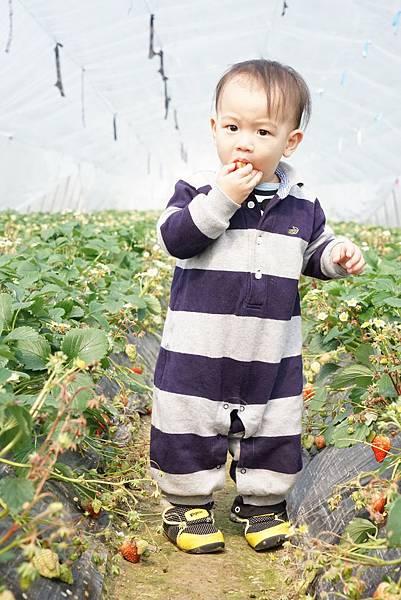 採草莓樂烤肉趣 (68).JPG