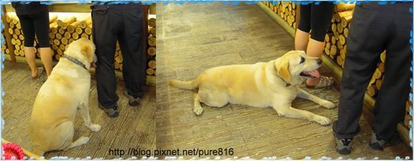 台中-工作犬2.jpg