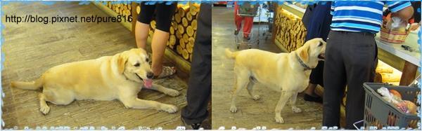 台中-工作犬3.jpg