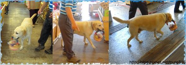 台中-工作犬end.jpg