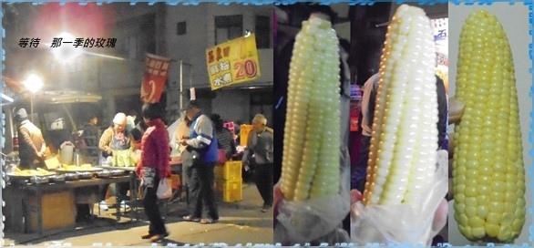 0後龍-玉米田