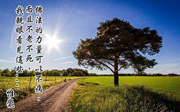 ws_Fields_Way_Trees_Fences_Sun_1920x1200