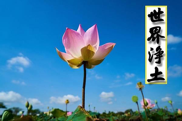 flower-2306510_960_720