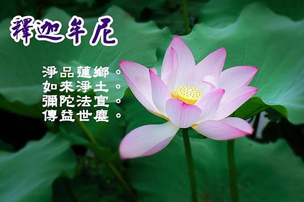lotus-1127013_960_720