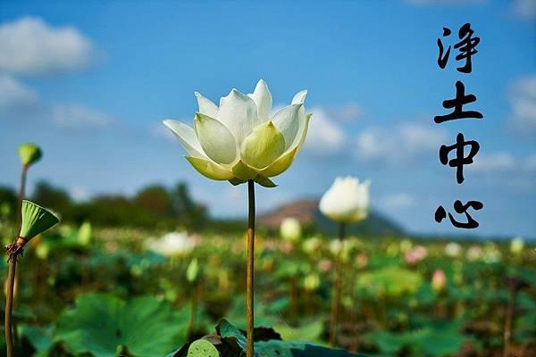 lotus-2436937_960_720