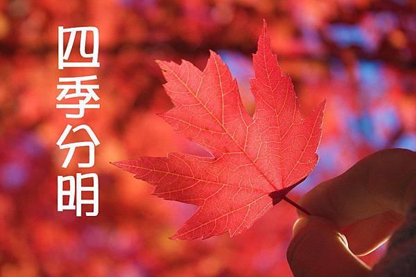 autumn-969929_960_720