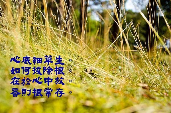 grass-932779_960_720