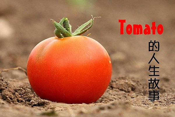 tomato-1531584_960_720
