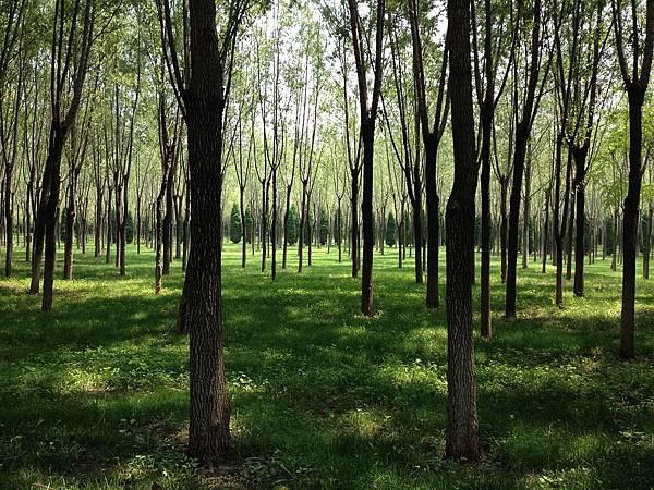 woods-618193_960_720