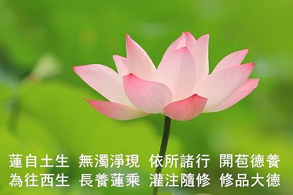 0919真願蓮生