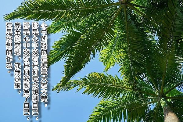 tree-2387629_960_720