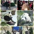 木柵動物園.1.jpg