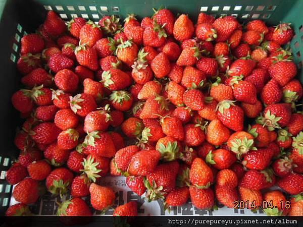 麵包機做草莓果醬.1.JPG