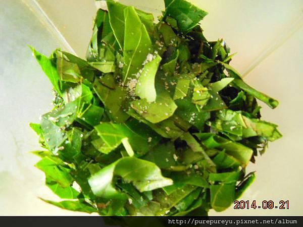香椿醬5.JPG