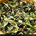 香椿茶.3.JPG