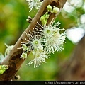 樹葡萄蘋果汁4.jpg