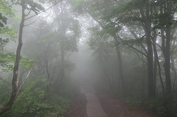 yahiko_029.jpg
