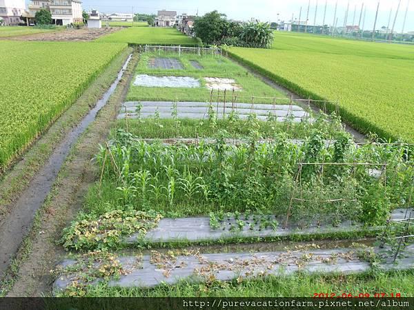 菜園1.JPG