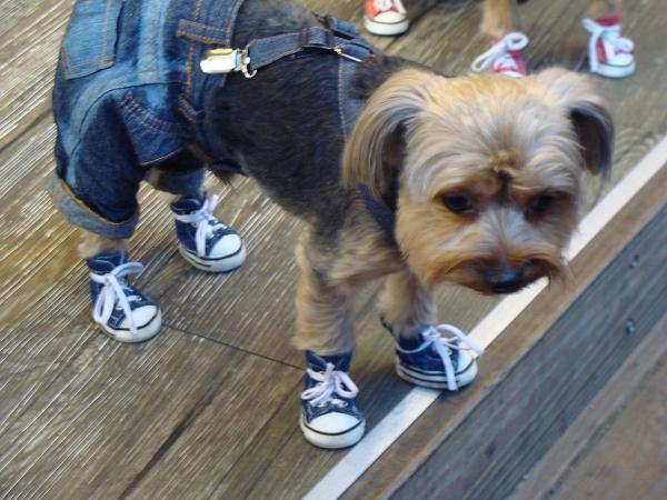 穿鞋鞋的狗狗^O^