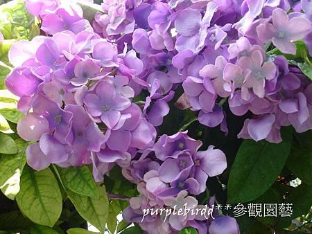 DSC00525_副本