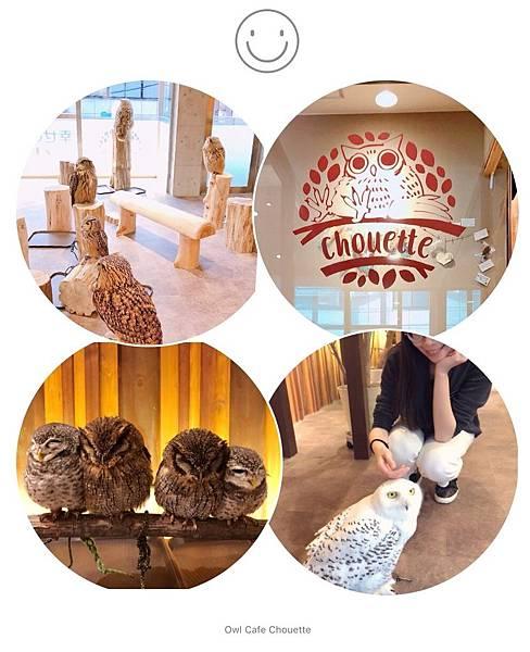 ▌日本大阪 ▌ 心齋橋必訪貓頭鷹咖啡廳 フクロウカフェ Owl Cafe Chouette