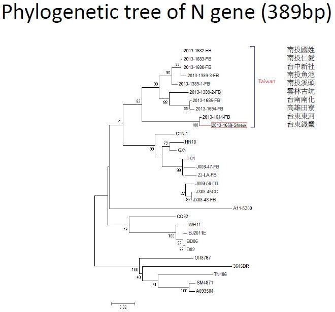 WTF N gene tree