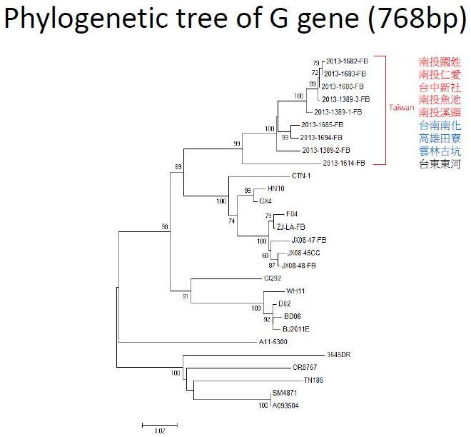 WTF G gene tree